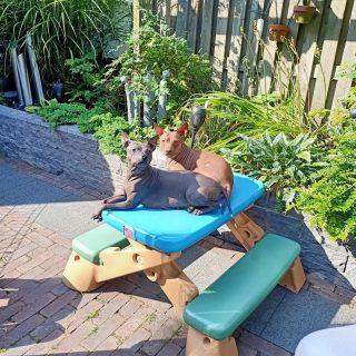 Kijk... We merken dat het richting de herfst loopt, er is niet meer zoveel zon in de tuin en we voelen dat de grond iets kouder is....dus zorgen we voor een perfecte oplossing, lekkere warme buik en nog in de zon 😂