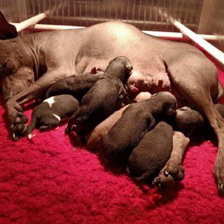 Yeahhh daar zijn ze, 8 prachtige puppies..nu al helemaal verliefd 😍😍😍😍😍😍😍😍